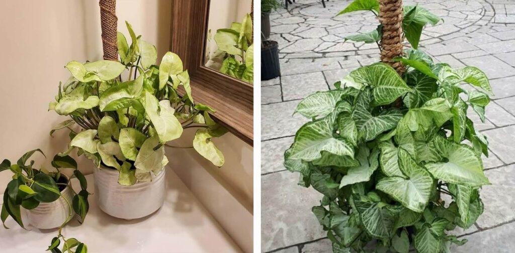 decorating tips in winter Sue Pitchforth Decor Therapy Plus