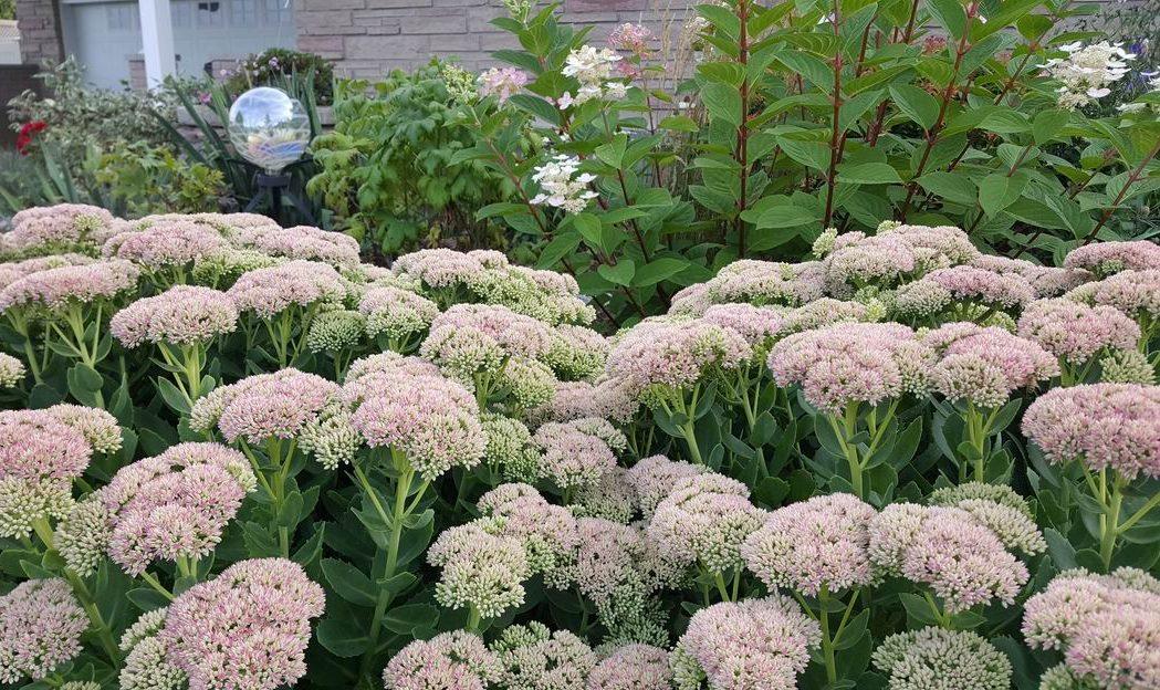 GAR gardening tips A