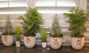 Homes for the Holidays Flowers Talk Tivoli Christmas decorating miniature trees