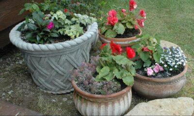 container gardening steve maxwell garden advice