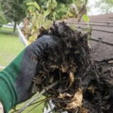 early spring maintenance tips