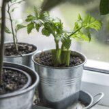 GAR gardening trends herbs
