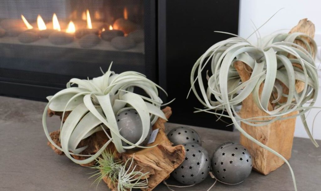 Homes for the Holidays Flowers Talk Tivoli Christmas decorating succulents air plants