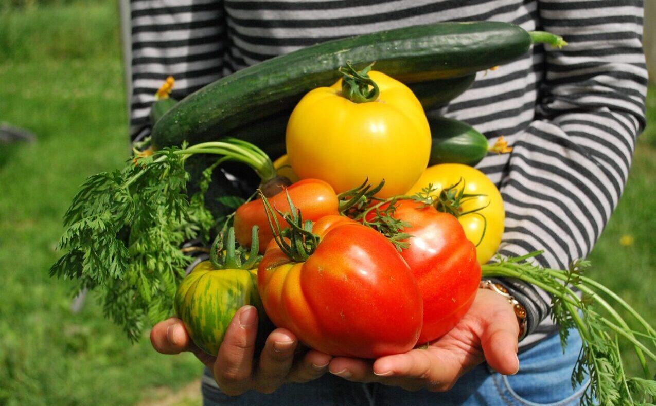 vegetable gardening during the pandemic
